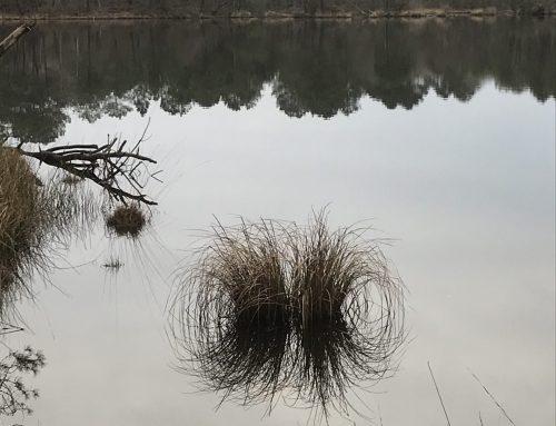 Balade au lac noir